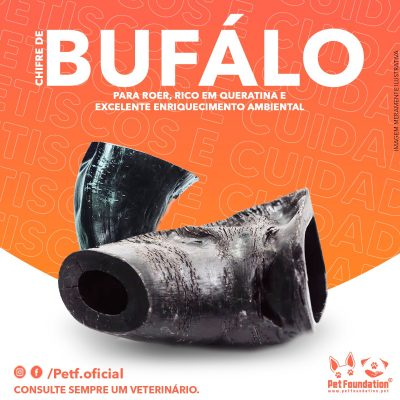 chifre-de-bufalo
